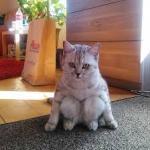 Kočka napodobující nezdatného člověka